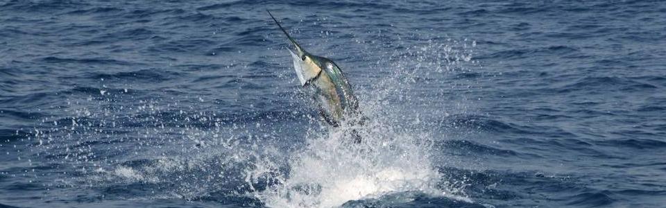 pesca-esportiva-iscas-artificiais